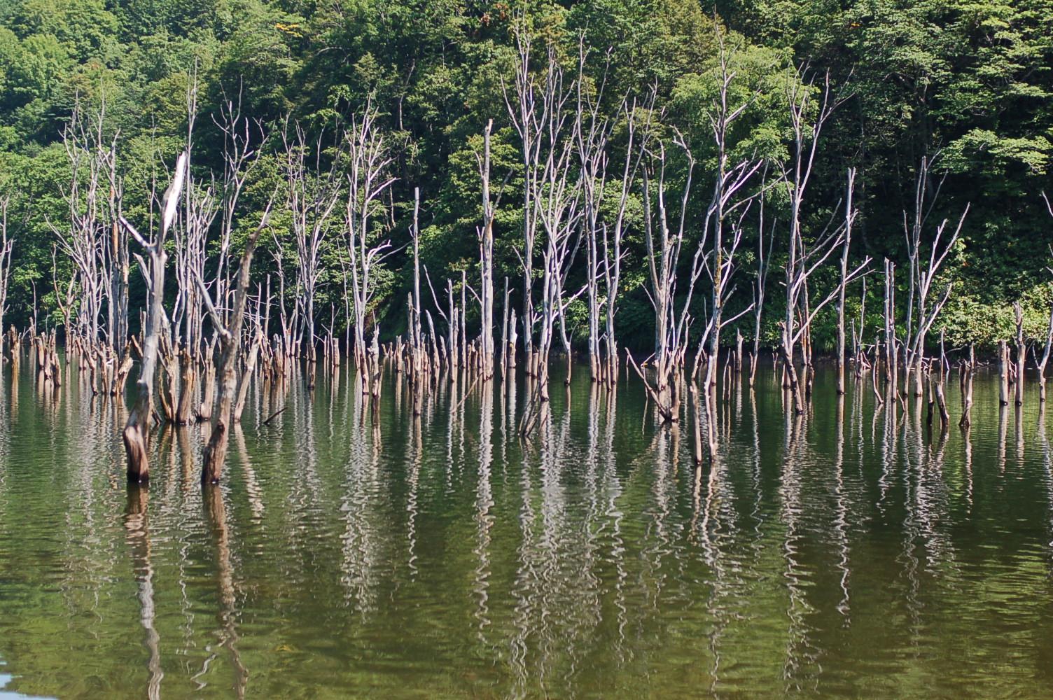 赤井川村の落合ダム湖: 良いことは、広める